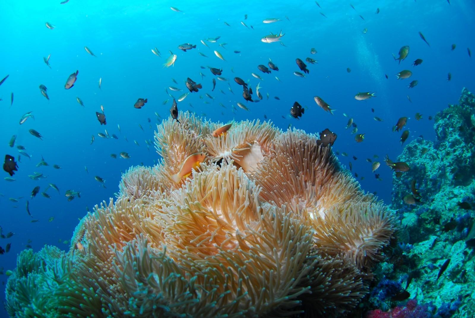 Une photographie libre de droit de vie aquatique (CC)