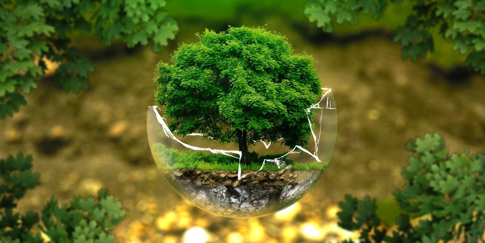 ecosia le moteur de recherche colo qui plante des arbres est il g nial ou hypocrite archimag. Black Bedroom Furniture Sets. Home Design Ideas